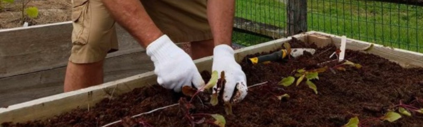 A gardener wearing a hat and gloves bends down to plant seedlings in a raised bed. A fence and red barn are in the background.